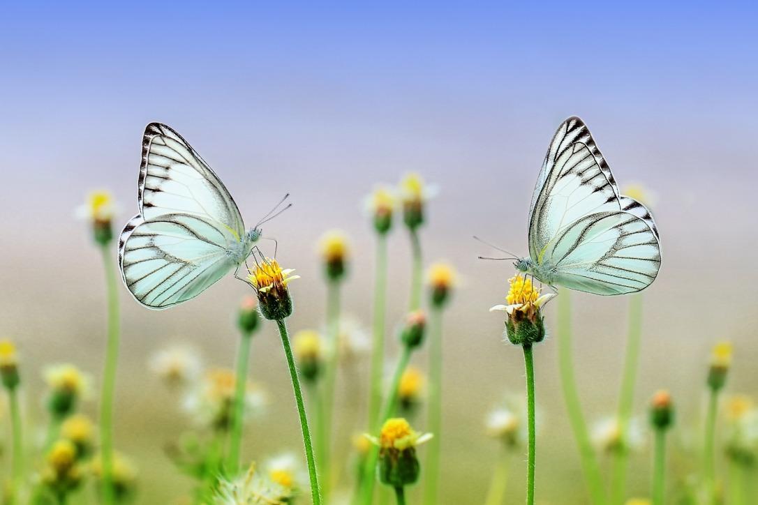 butterfly-0.jpg