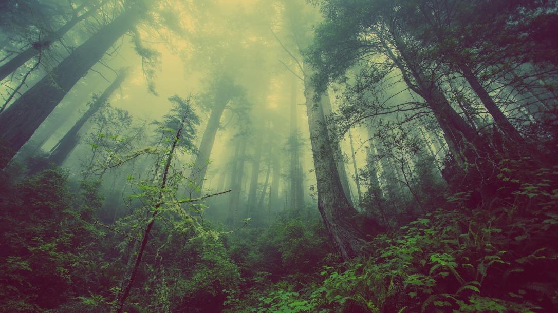 forest-.jpg