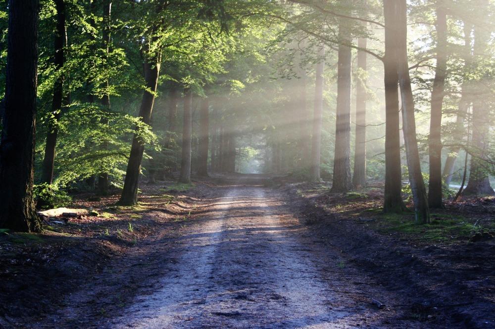 road-0.jpg