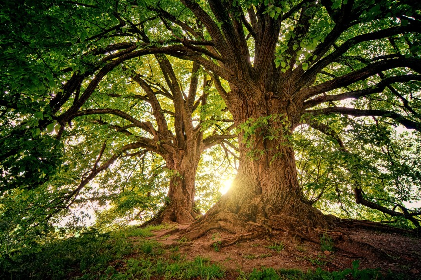tree-.jpg