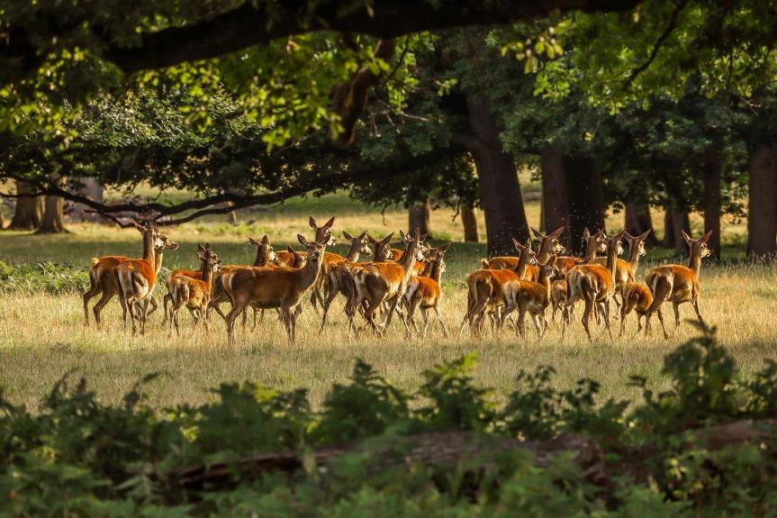 deer-.jpg