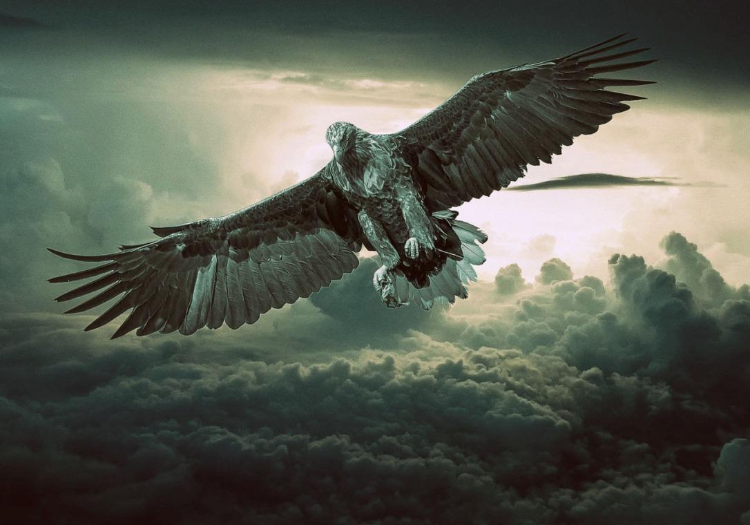 eagle-.jpg