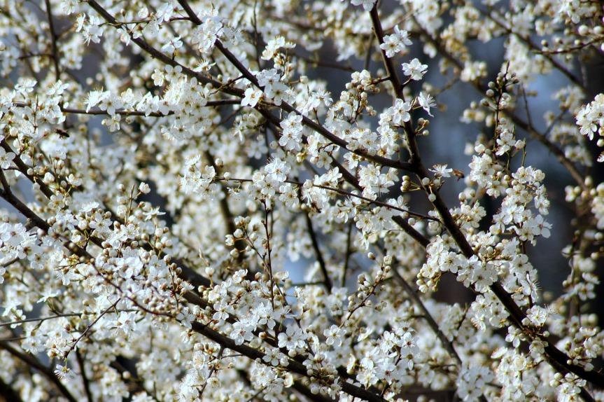 fruit-tree-.jpg