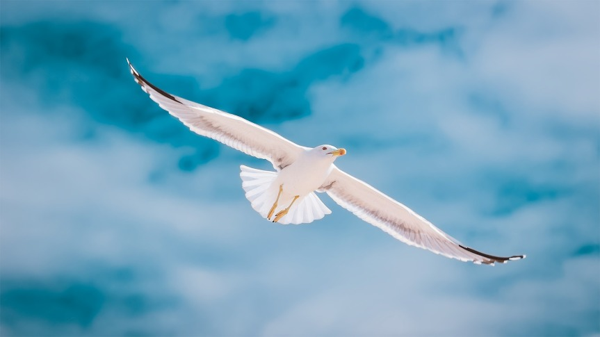 seagull-.jpg