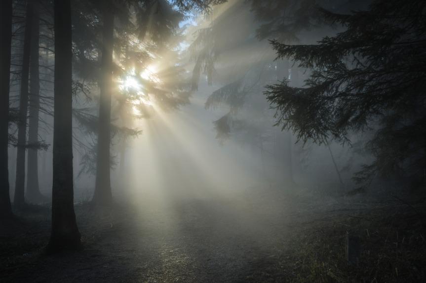 sunbeam-.jpg